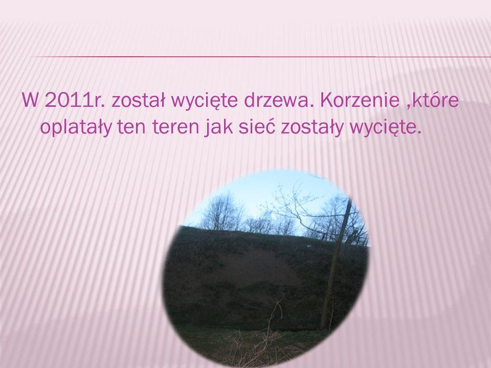 W 2011r. został wycięte drzewa. Korzenie,które oplatały ten teren jak sieć zostały wycięte.