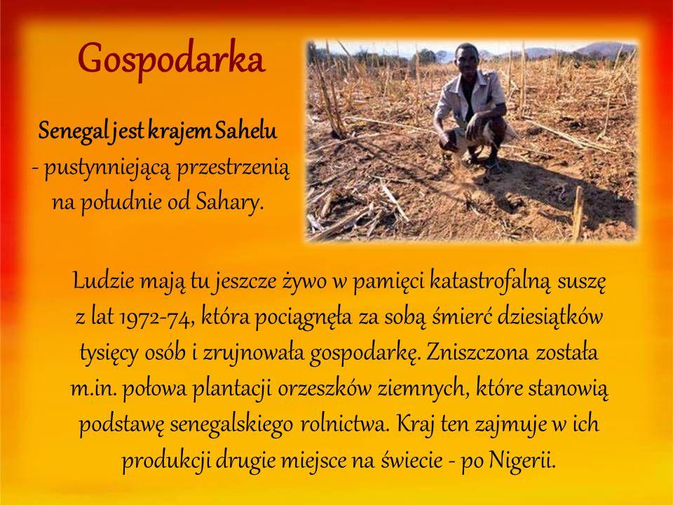 Gospodarka Senegal jest krajem Sahelu - pustynniejącą przestrzenią na południe od Sahary. Ludzie mają tu jeszcze żywo w pamięci katastrofalną suszę z