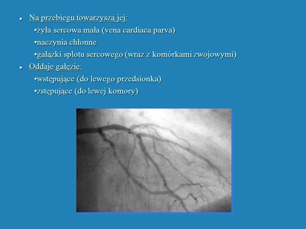 Na przebiegu towarzyszą jej: Na przebiegu towarzyszą jej: żyła sercowa mała (vena cardiaca parva) żyła sercowa mała (vena cardiaca parva) naczynia chł