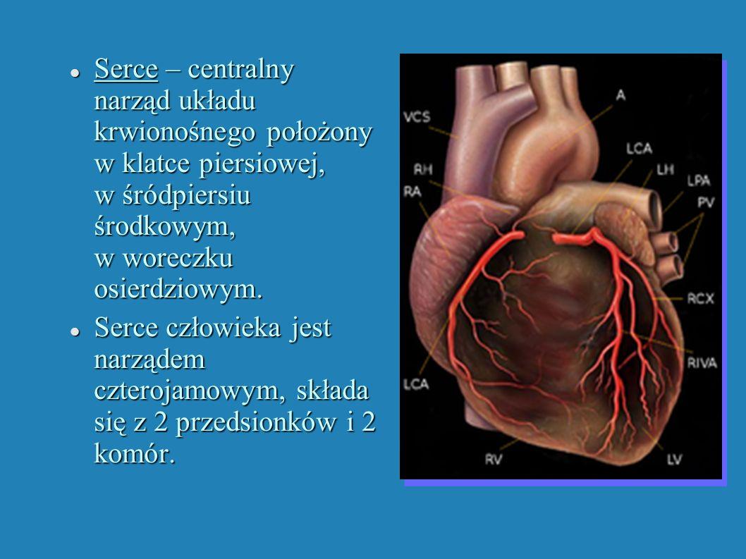 Serce – centralny narząd układu krwionośnego położony w klatce piersiowej, w śródpiersiu środkowym, w woreczku osierdziowym. Serce – centralny narząd
