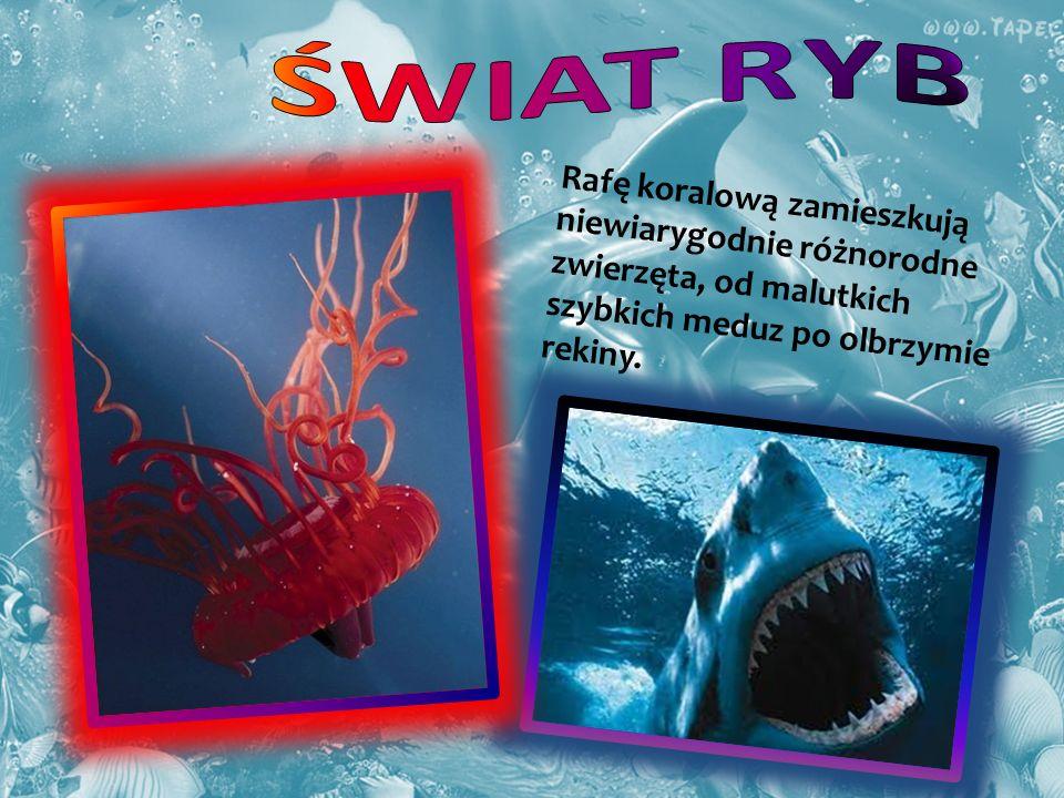 Rafę koralową zamieszkują niewiarygodnie różnorodne zwierzęta, od malutkich szybkich meduz po olbrzymie rekiny.