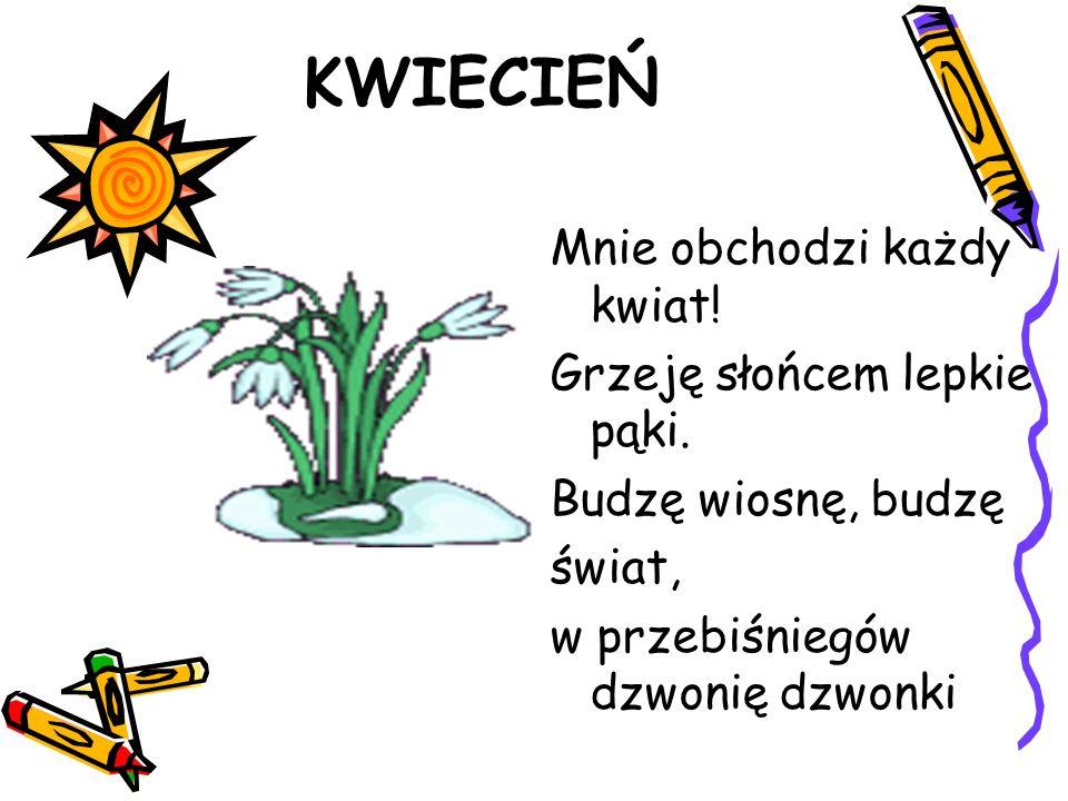 KWIECIEŃ Mnie obchodzi każdy kwiat! Grzeję słońcem lepkie pąki. Budzę wiosnę, budzę świat, w przebiśniegów dzwonię dzwonki