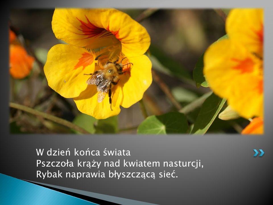 W dzień końca świata Pszczoła krąży nad kwiatem nasturcji, Rybak naprawia błyszczącą sieć.
