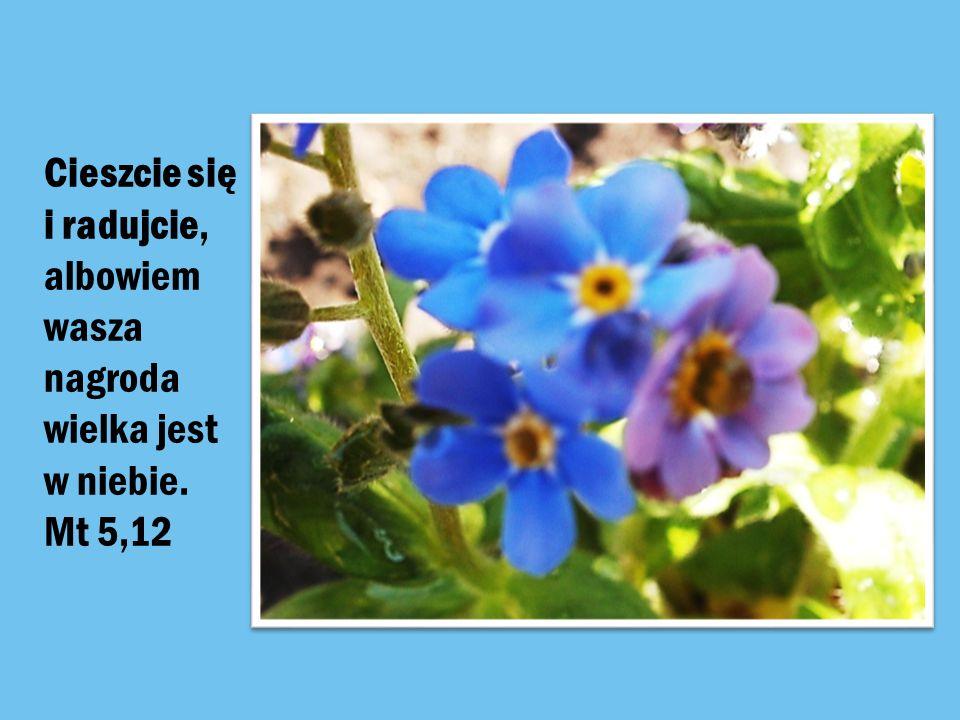 Cieszcie się i radujcie, albowiem wasza nagroda wielka jest w niebie. Mt 5,12