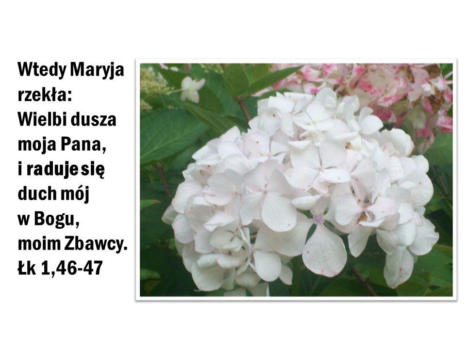 Wtedy Maryja rzekła: Wielbi dusza moja Pana, i raduje się duch mój w Bogu, moim Zbawcy. Łk 1,46-47