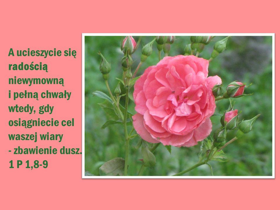 A ucieszycie się radością niewymowną i pełną chwały wtedy, gdy osiągniecie cel waszej wiary - zbawienie dusz. 1 P 1,8-9