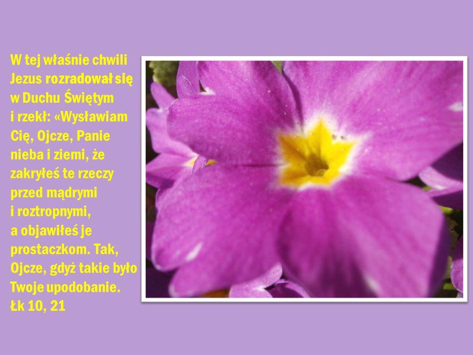 W tej właśnie chwili Jezus rozradował się w Duchu Świętym i rzekł: «Wysławiam Cię, Ojcze, Panie nieba i ziemi, że zakryłeś te rzeczy przed mądrymi i r