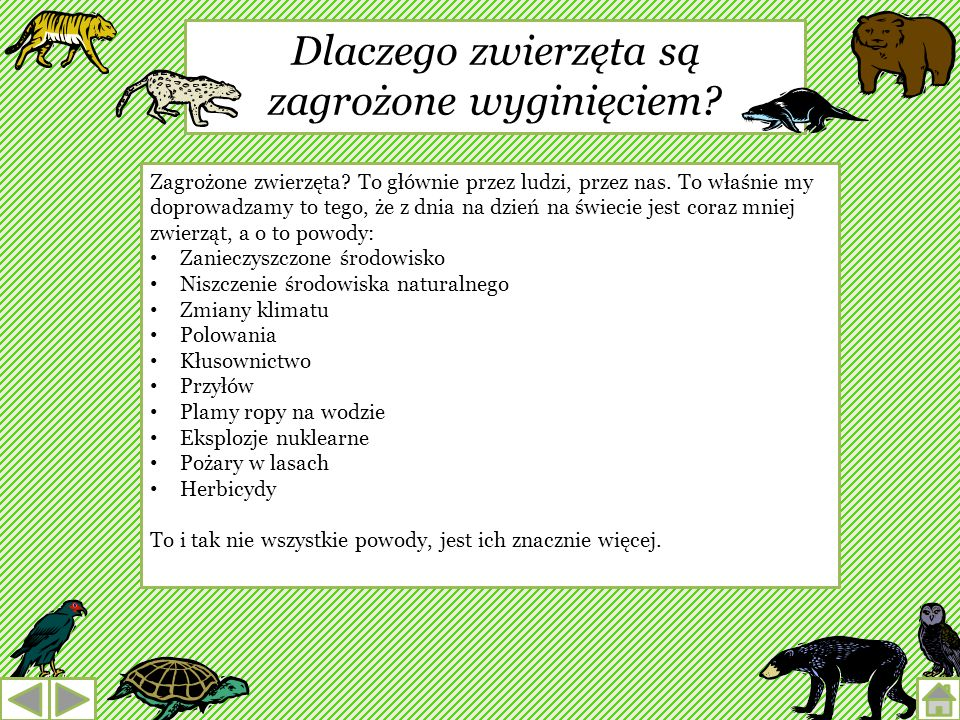 Pozwólmy zwierzętom żyć tam, gdzie się urodziły SPIS TREŚCI Dlaczego zwierzęta są zagrożone wyginięciem? Zagrożone gatunki, które występują w Polsce W