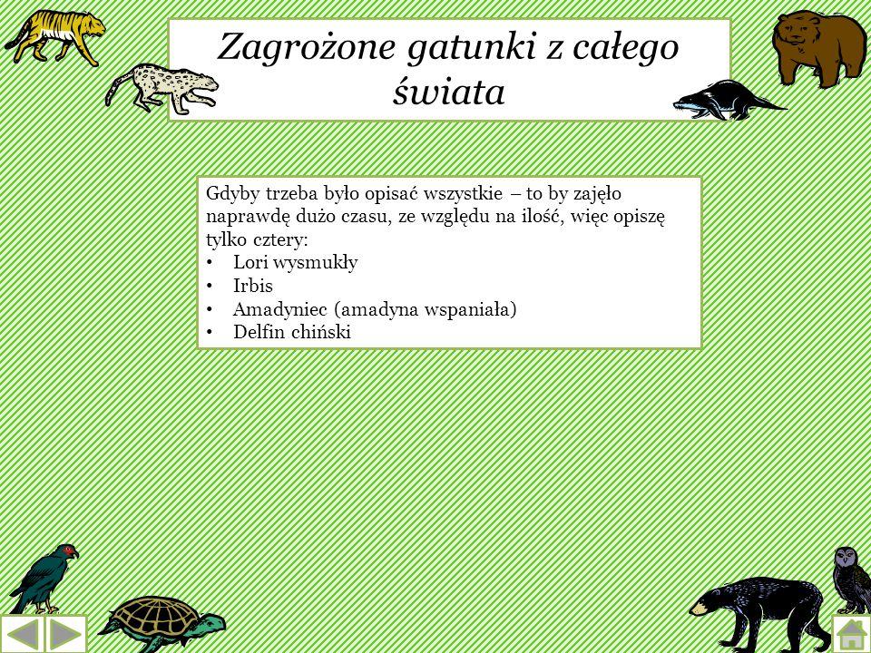 Żółw błotny Jedyny gatunek żółwia występujący w Polsce. Może żyć nawet ponad 120 lat. Wielkość jego pancerza dochodzi do 20 cm. Żółwia błotnego pod wi
