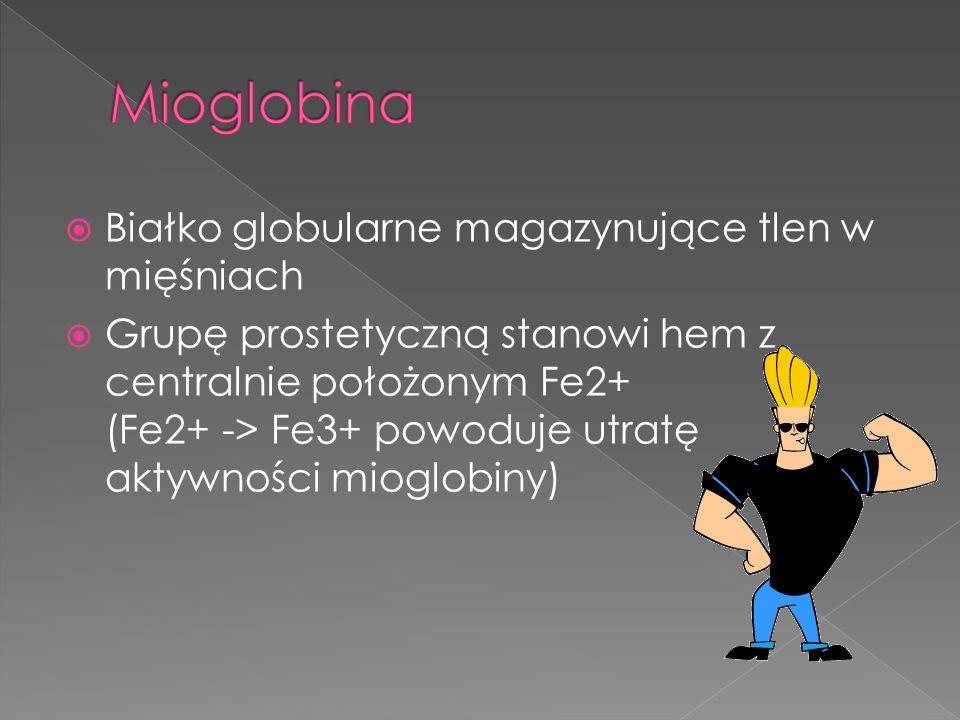 Białko globularne magazynujące tlen w mięśniach Grupę prostetyczną stanowi hem z centralnie położonym Fe2+ (Fe2+ -> Fe3+ powoduje utratę aktywności mi