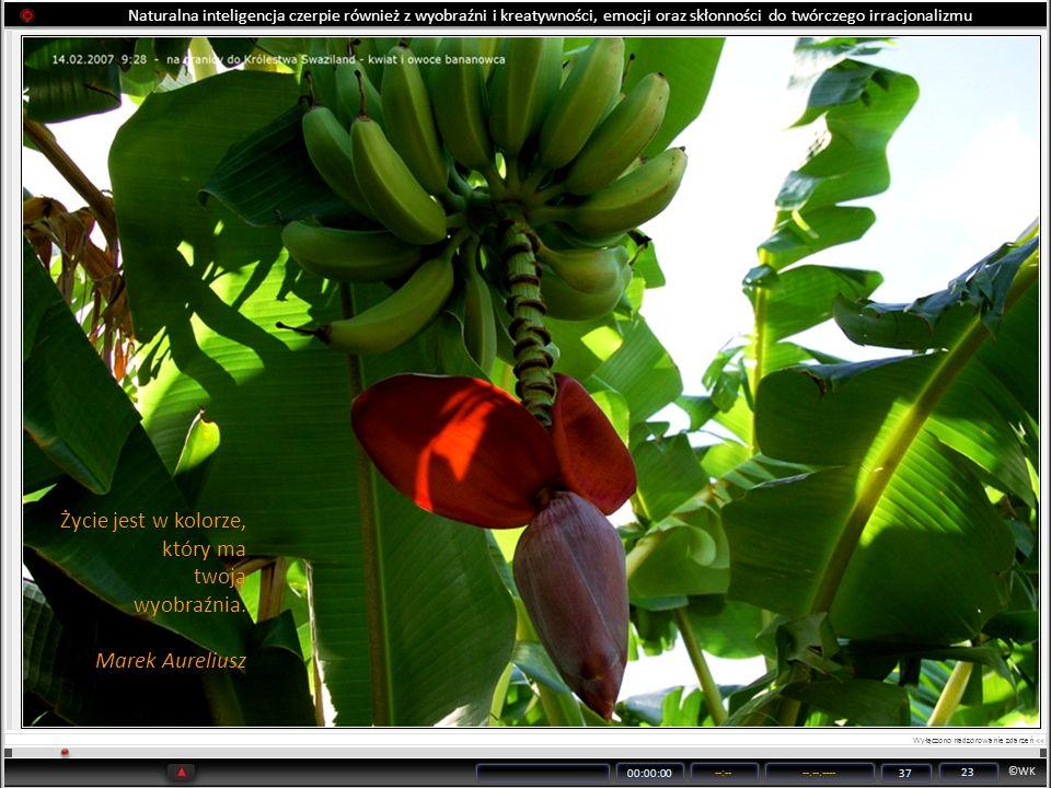 ©WK 00:00:00 --:----.--.---- 37 23 Naturalna inteligencja czerpie również z wyobraźni i kreatywności, emocji oraz skłonności do twórczego irracjonaliz