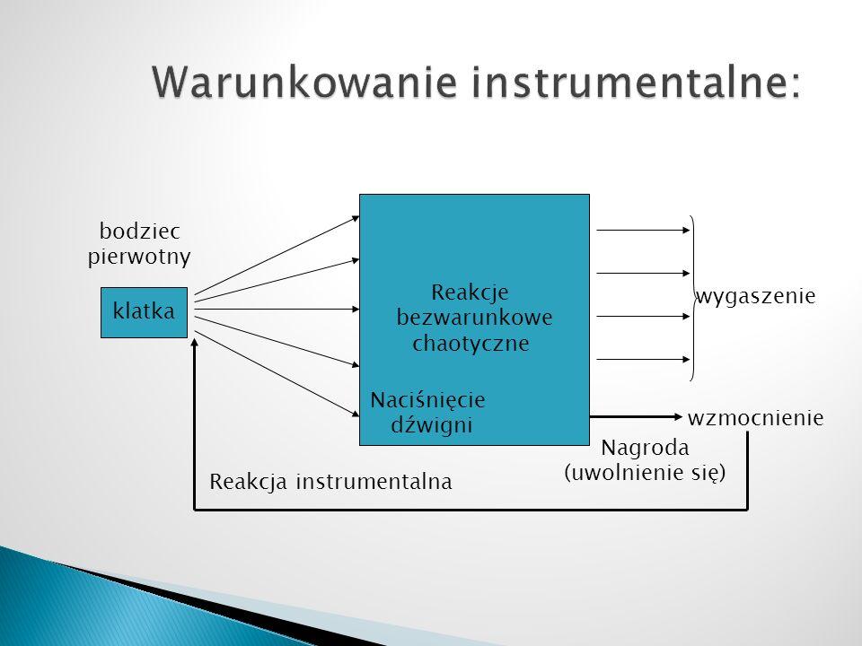 klatka bodziec pierwotny Reakcje bezwarunkowe chaotyczne Nagroda (uwolnienie się) Naciśnięcie dźwigni wygaszenie wzmocnienie Reakcja instrumentalna