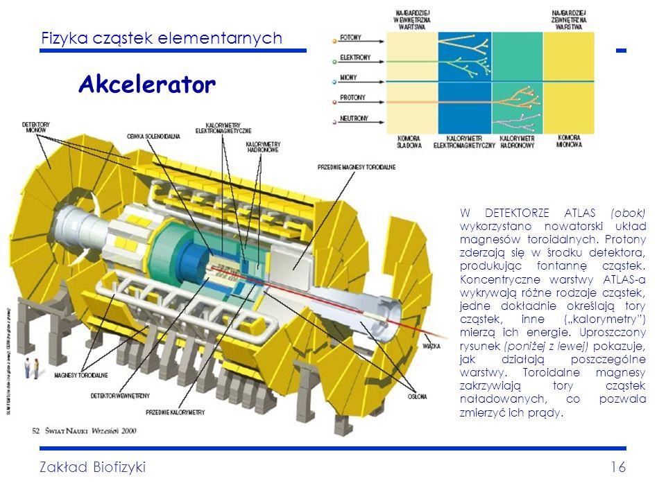 Fizyka cząstek elementarnych Zakład Biofizyki16 Akcelerator W DETEKTORZE ATLAS (obok) wykorzystano nowatorski układ magnesów toroidalnych. Protony zde