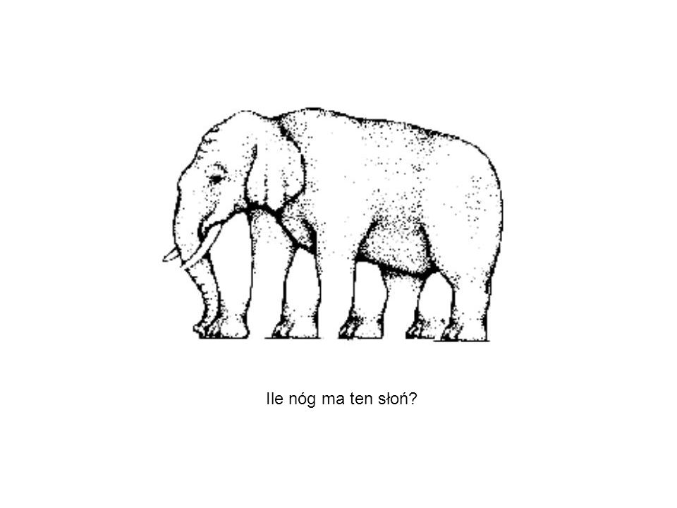 Ile nóg ma ten słoń?