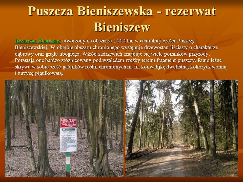 Jezioro Licheńskie Jest jednym z jezior rynnowych, należących do rynny jeziora Gopło.