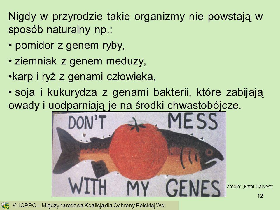 12 Nigdy w przyrodzie takie organizmy nie powstają w sposób naturalny np.: pomidor z genem ryby, ziemniak z genem meduzy, karp i ryż z genami człowiek