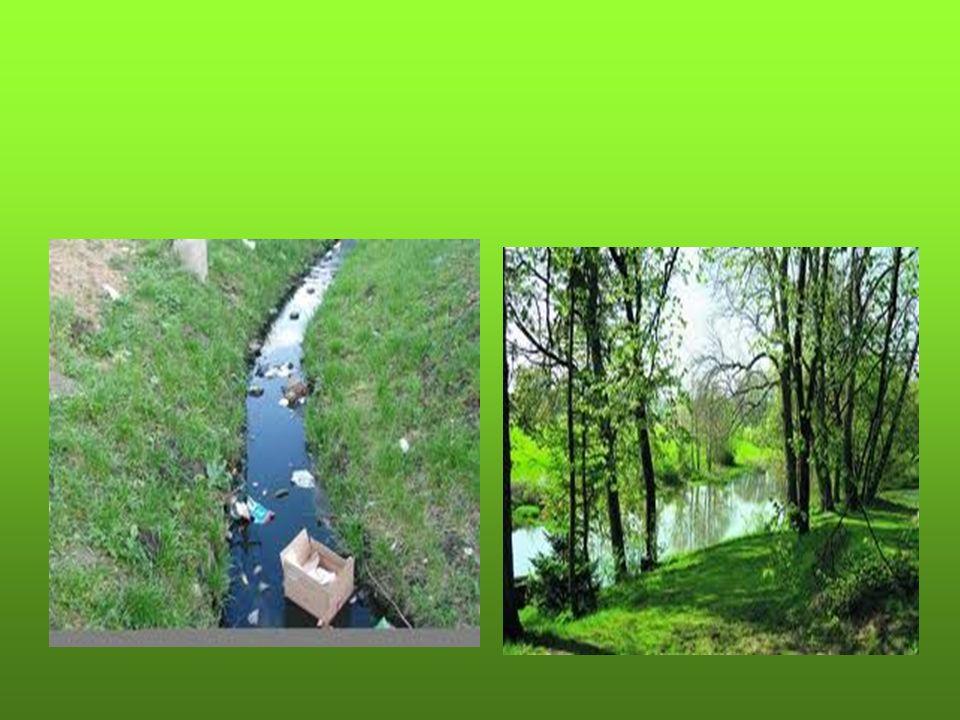 WODY Nie zanieczyszczajmy rzek… …dajmy żyć rybom!