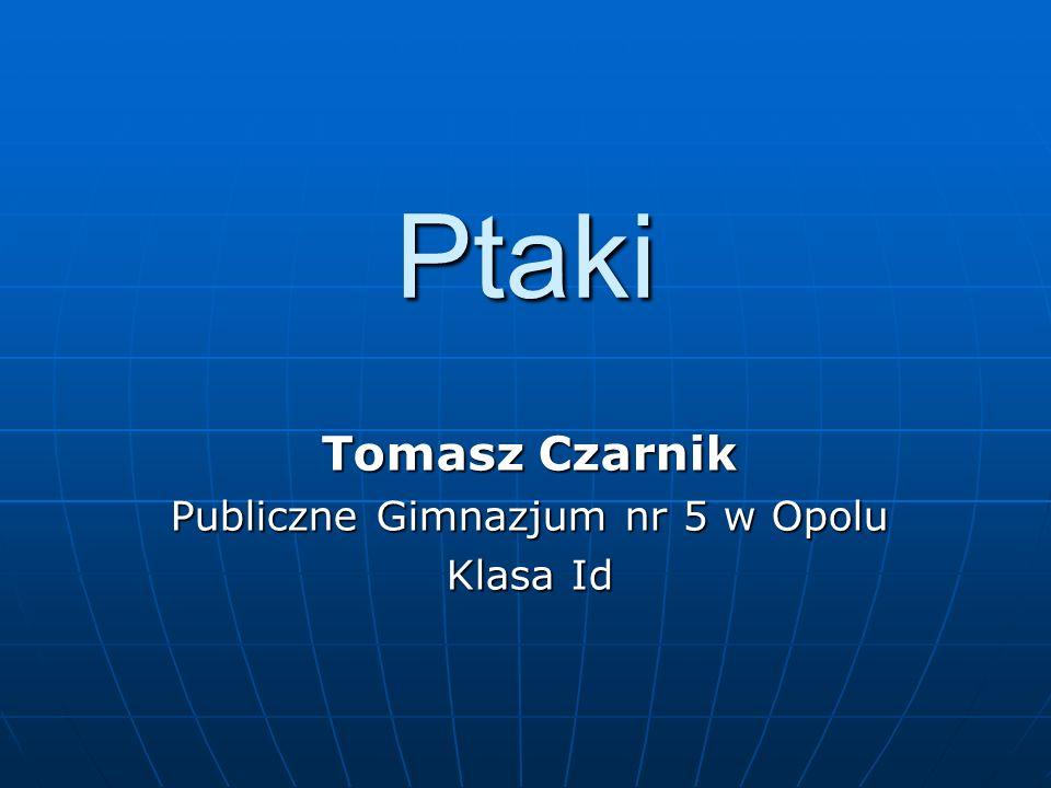 Ptaki Tomasz Czarnik Publiczne Gimnazjum nr 5 w Opolu Klasa Id