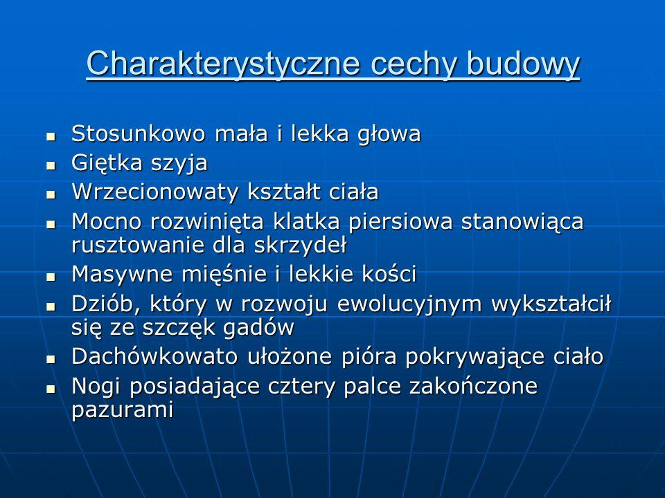 http://www.sciaga.pl/slowniki-tematyczne/2019/ptaki/http://www.sciaga.pl/slowniki-tematyczne/2019/ptaki/ (dostęp 25/02/2012)