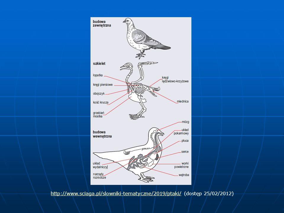 Rodzaje dziobów jako narządów chwytnych Silny, zakrzywiony dziób ptaków drapieżnych (orzeł, sokół, myszołów) przystosowany do rozszarpywania zdobyczy Silny, zakrzywiony dziób ptaków drapieżnych (orzeł, sokół, myszołów) przystosowany do rozszarpywania zdobyczy Płaski dziób ptaków wodnych (kaczka, łabędź) działający jak sito służący do odcedzania wody Płaski dziób ptaków wodnych (kaczka, łabędź) działający jak sito służący do odcedzania wody Długi pęsetowaty dziób ptaków owadożernych (dudek) służący do wyciągania owadów z ziemi Długi pęsetowaty dziób ptaków owadożernych (dudek) służący do wyciągania owadów z ziemi Krótki, mocny czasem skrzyżowany dziób ptaków żywiących się nasionami (wróbel, krzyżodziób) służący do wyłuskiwania nasion Krótki, mocny czasem skrzyżowany dziób ptaków żywiących się nasionami (wróbel, krzyżodziób) służący do wyłuskiwania nasion