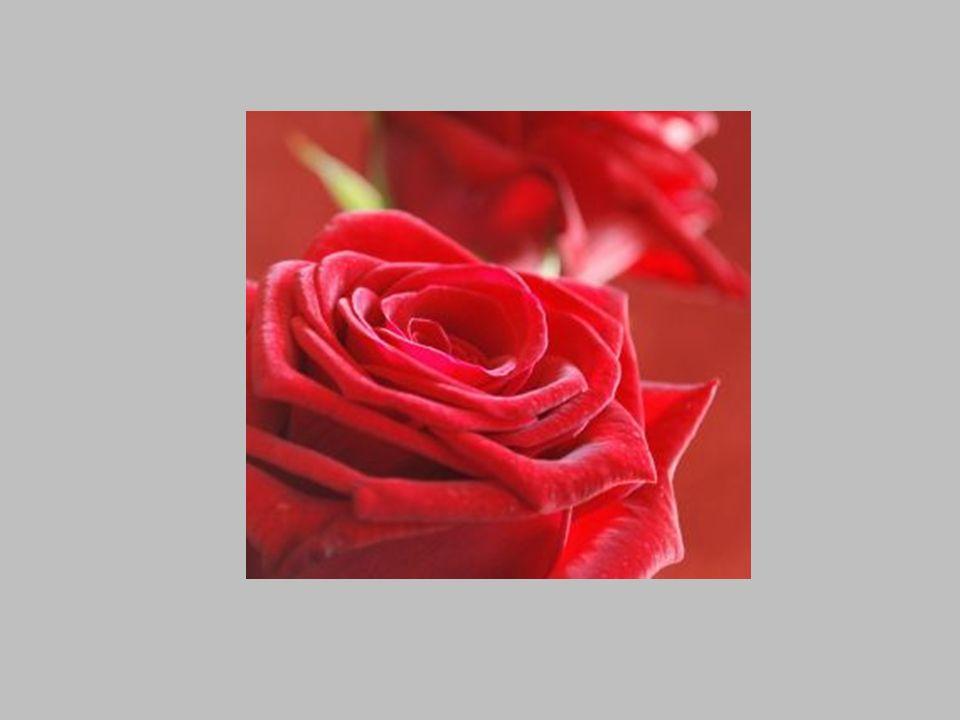 Każdy, kto zakłócił jej spokój, trafiał do ogrodu pełnego róż, jako jedna z nich.