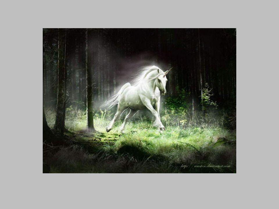 Wszyscy ludzie wiedzieli, iż czarownica nad wszystkie stworzenia upodobała sobie białe jednorożce.