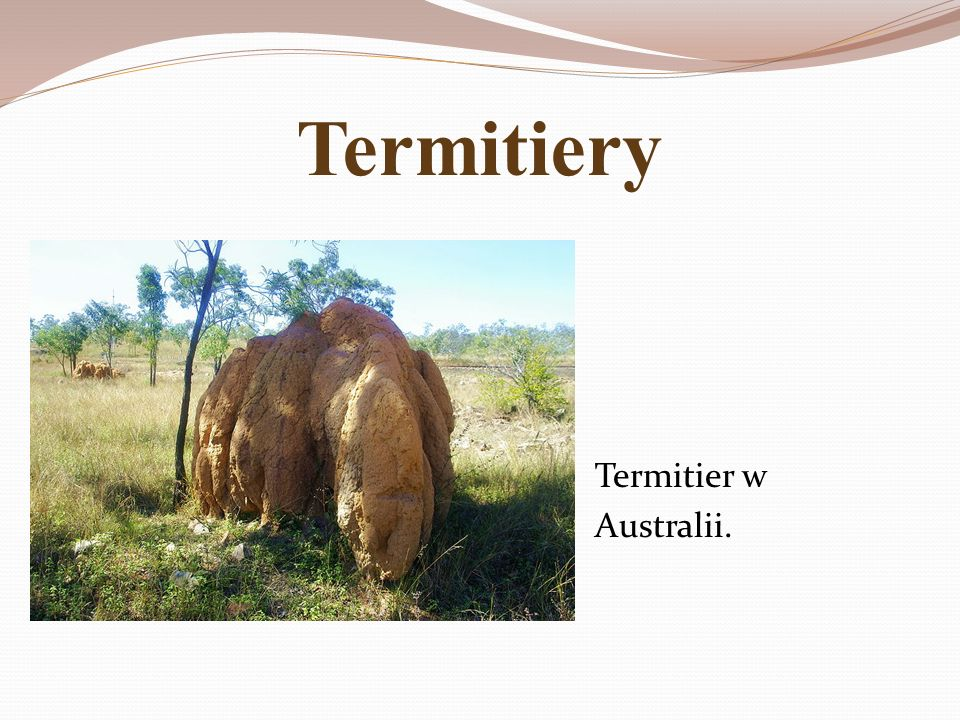 Termitiery Termitier w Australii.