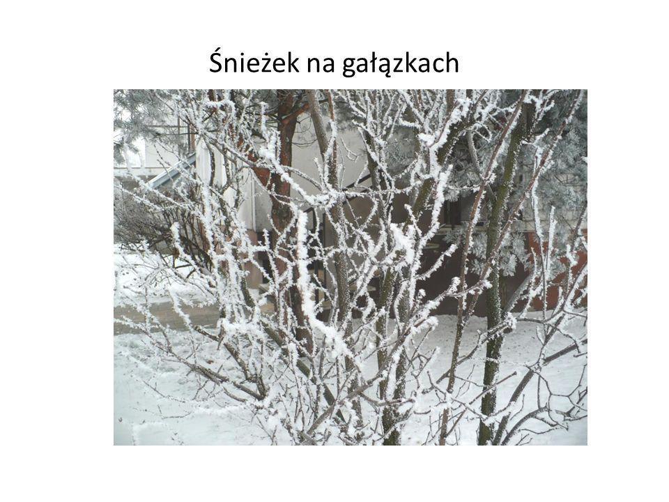 Śnieżek na gałązkach