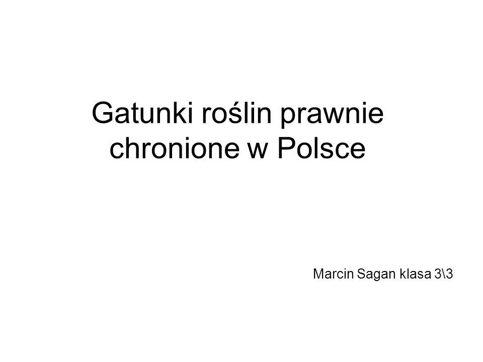 Gatunki roślin prawnie chronione w Polsce Marcin Sagan klasa 3\3