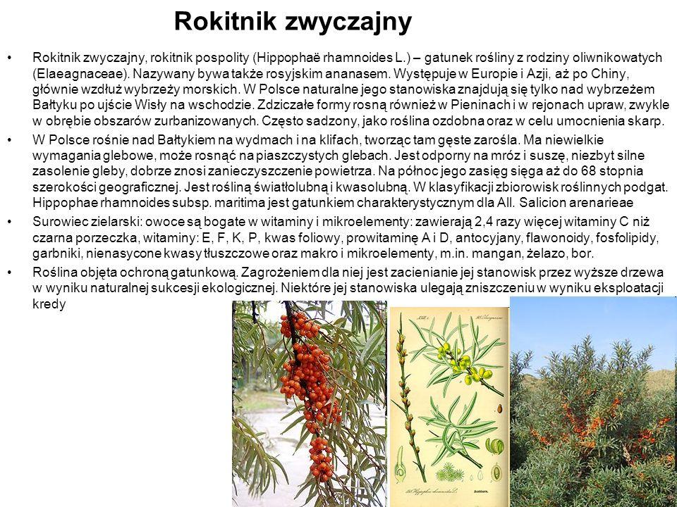 Rokitnik zwyczajny Rokitnik zwyczajny, rokitnik pospolity (Hippophaë rhamnoides L.) – gatunek rośliny z rodziny oliwnikowatych (Elaeagnaceae). Nazywan