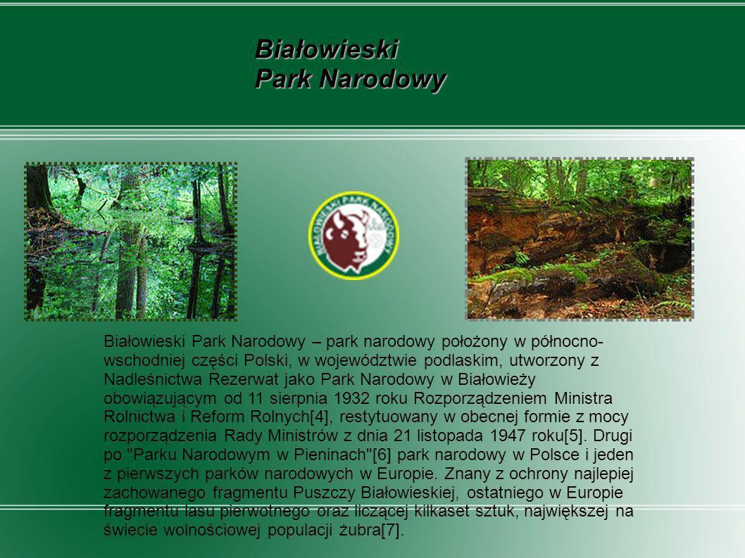 Ojcowski Park Narodowy Ojcowski Park Narodowy, utworzony w 1956, jest jednym z 23 parków narodowych w Polsce.