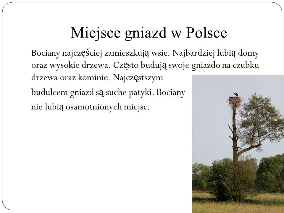 Miejsce gniazd w Polsce Bociany najcz ęś ciej zamieszkuj ą wsie. Najbardziej lubi ą domy oraz wysokie drzewa. Cz ę sto buduj ą swoje gniazdo na czubku
