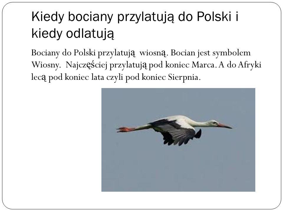 Kiedy bociany przylatują do Polski i kiedy odlatują Bociany do Polski przylatuj ą wiosn ą. Bocian jest symbolem Wiosny. Najcz ęś ciej przylatuj ą pod
