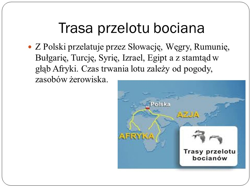 Trasa przelotu bociana Z Polski przelatuje przez Słowację, Węgry, Rumunię, Bułgarię, Turcję, Syrię, Izrael, Egipt a z stamtąd w głąb Afryki. Czas trwa