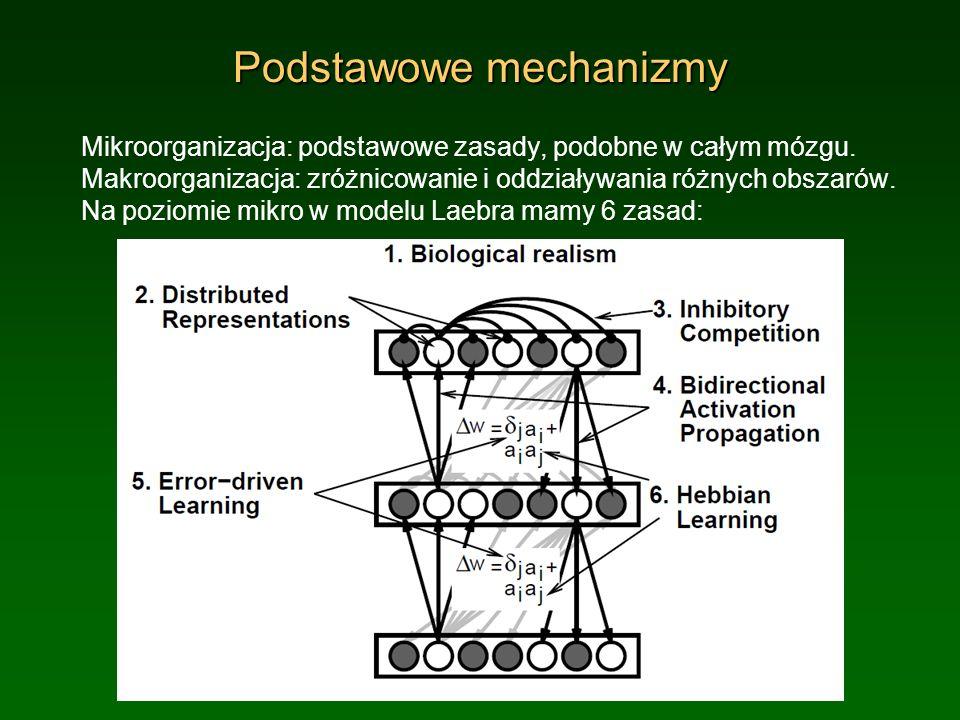 Podstawowe mechanizmy Mikroorganizacja: podstawowe zasady, podobne w całym mózgu. Makroorganizacja: zróżnicowanie i oddziaływania różnych obszarów. Na