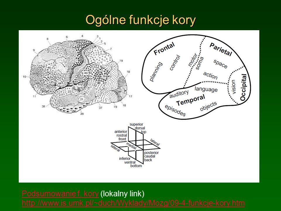 Ogólne funkcje kory Podsumowanie f. koryPodsumowanie f. kory (lokalny link) http://www.is.umk.pl/~duch/Wyklady/Mozg/09-4-funkcje-kory.htm http://www.i