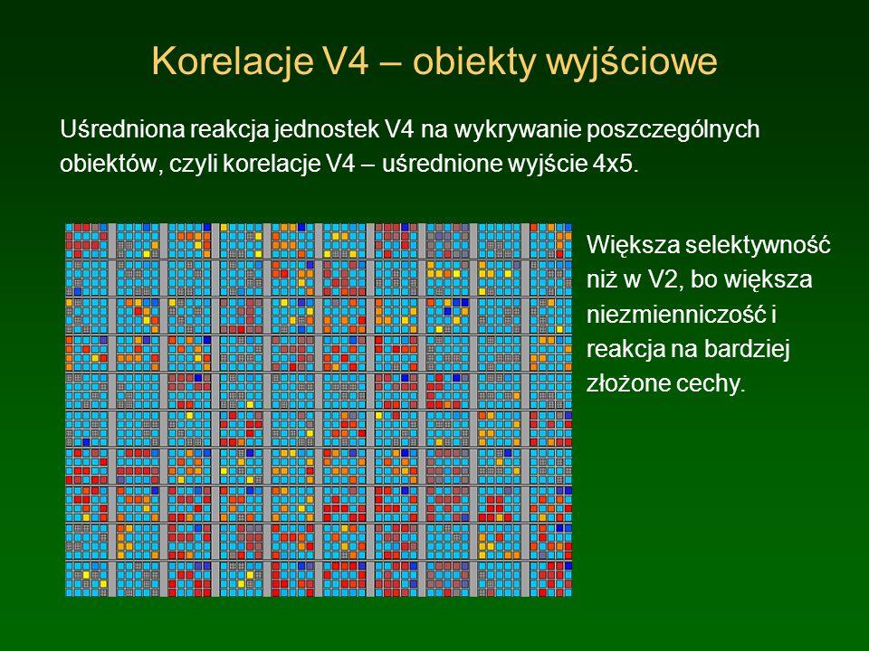 Testy pól recepcyjnych Obserwacja reakcji V2 i V4: 4 próbki używane w testach, każda pokazana we wszystkich pozycjach lewego kwadrantu wejść LGN, 11x11.