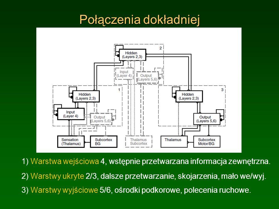 Połączenia dokładniej 1) Warstwa wejściowa 4, wstępnie przetwarzana informacja zewnętrzna. 2) Warstwy ukryte 2/3, dalsze przetwarzanie, skojarzenia, m