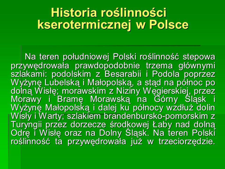 Historia roślinności kserotermicznej w Polsce Na teren południowej Polski roślinność stepowa przywędrowała prawdopodobnie trzema głównymi szlakami: po