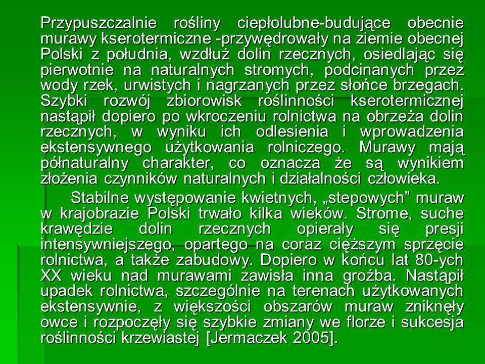 Przypuszczalnie rośliny ciepłolubne-budujące obecnie murawy kserotermiczne -przywędrowały na ziemie obecnej Polski z południa, wzdłuż dolin rzecznych,