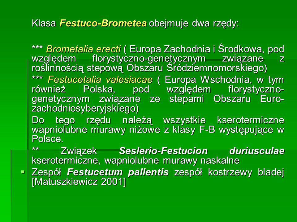 Klasa Festuco-Brometea obejmuje dwa rzędy: *** Brometalia erecti ( Europa Zachodnia i Środkowa, pod względem florystyczno-genetycznym związane z rośli