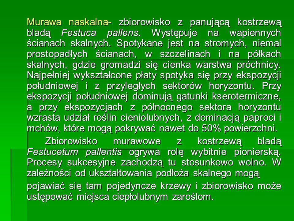 Murawa naskalna- zbiorowisko z panującą kostrzewą bladą Festuca pallens. Występuje na wapiennych ścianach skalnych. Spotykane jest na stromych, niemal