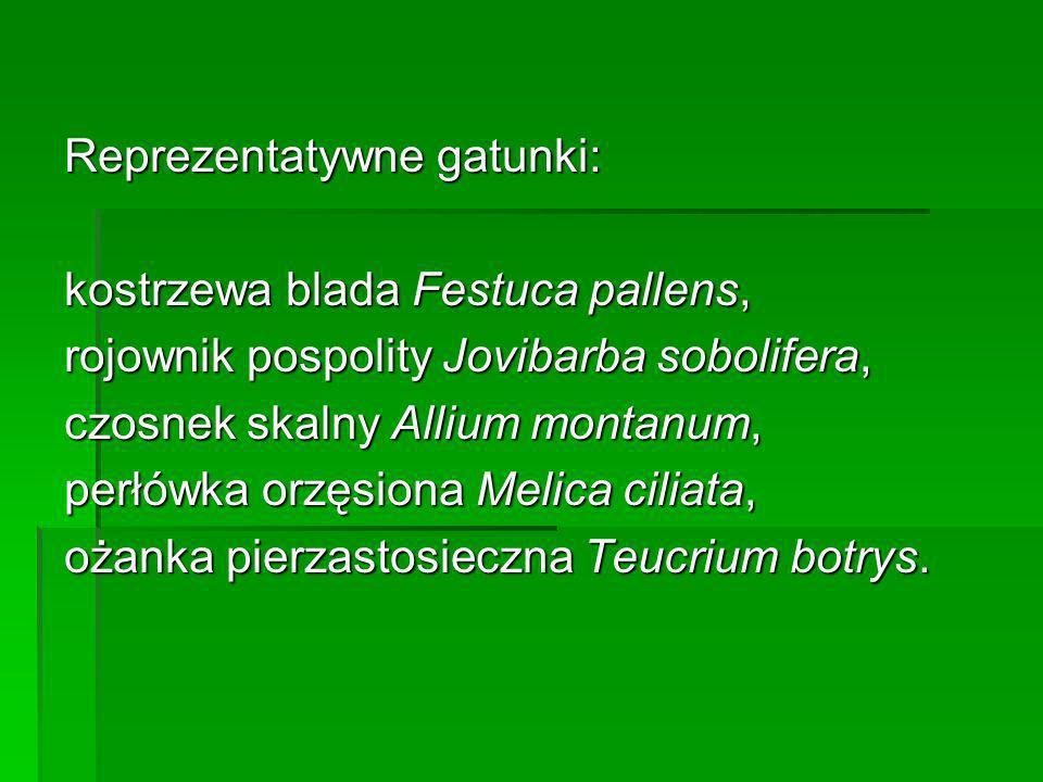 Reprezentatywne gatunki: kostrzewa blada Festuca pallens, rojownik pospolity Jovibarba sobolifera, czosnek skalny Allium montanum, perłówka orzęsiona