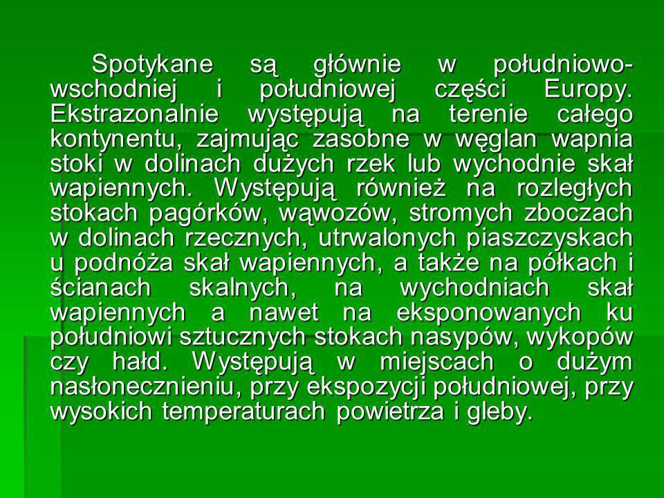 Spotykane są głównie w południowo- wschodniej i południowej części Europy. Ekstrazonalnie występują na terenie całego kontynentu, zajmując zasobne w w
