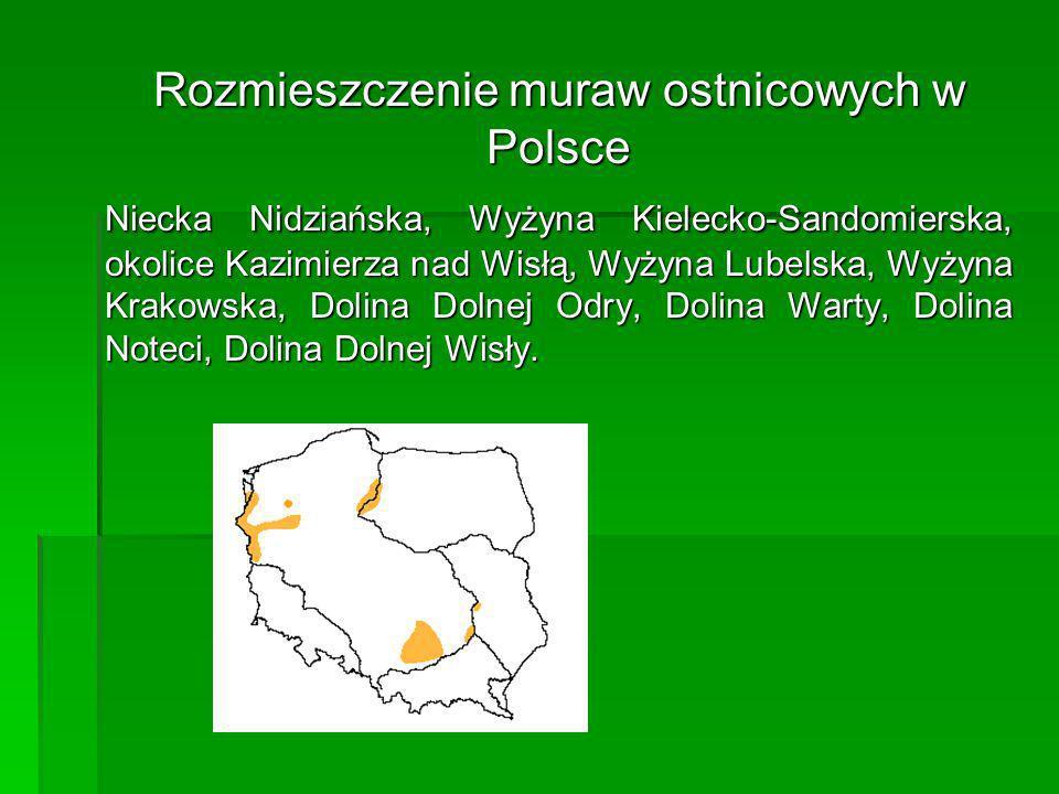 Rozmieszczenie muraw ostnicowych w Polsce Niecka Nidziańska, Wyżyna Kielecko-Sandomierska, okolice Kazimierza nad Wisłą, Wyżyna Lubelska, Wyżyna Krako