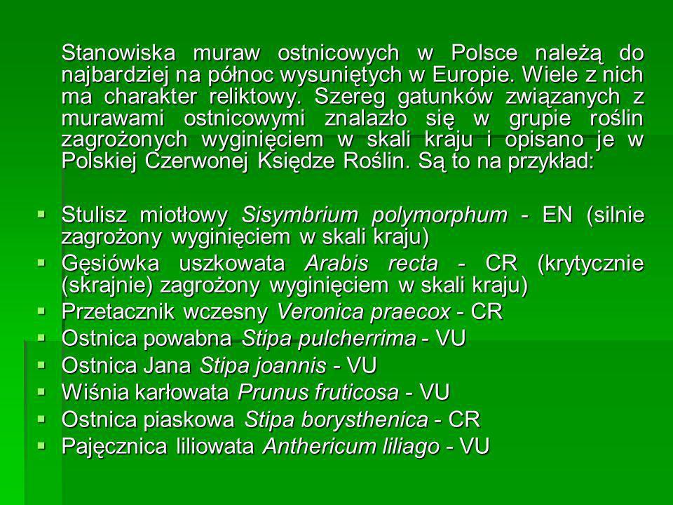 Stanowiska muraw ostnicowych w Polsce należą do najbardziej na północ wysuniętych w Europie. Wiele z nich ma charakter reliktowy. Szereg gatunków zwią