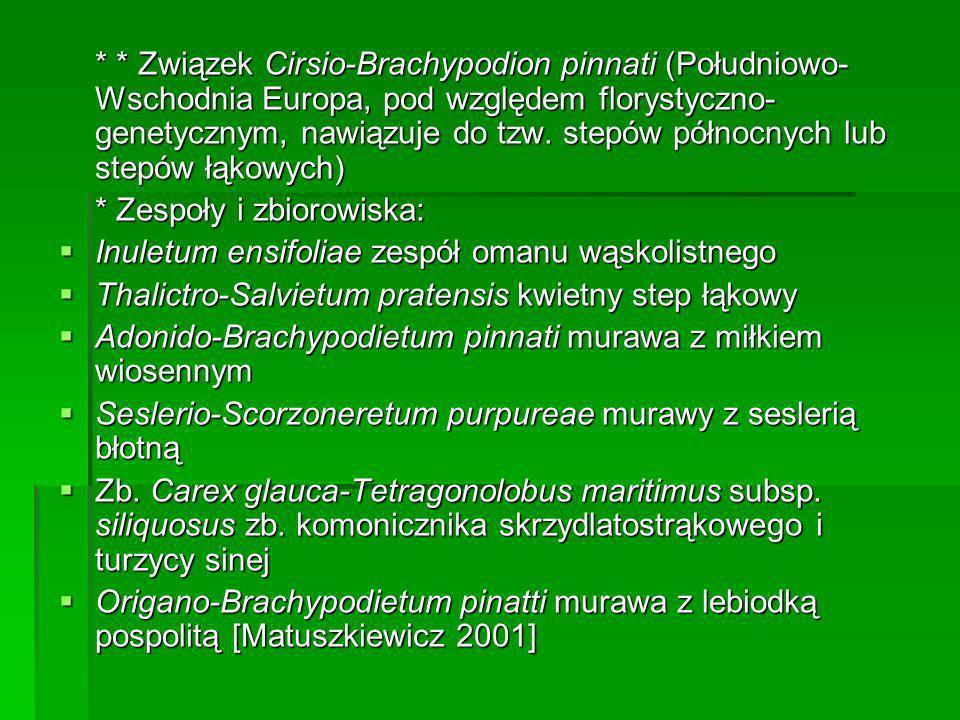 * * Związek Cirsio-Brachypodion pinnati (Południowo- Wschodnia Europa, pod względem florystyczno- genetycznym, nawiązuje do tzw. stepów północnych lub