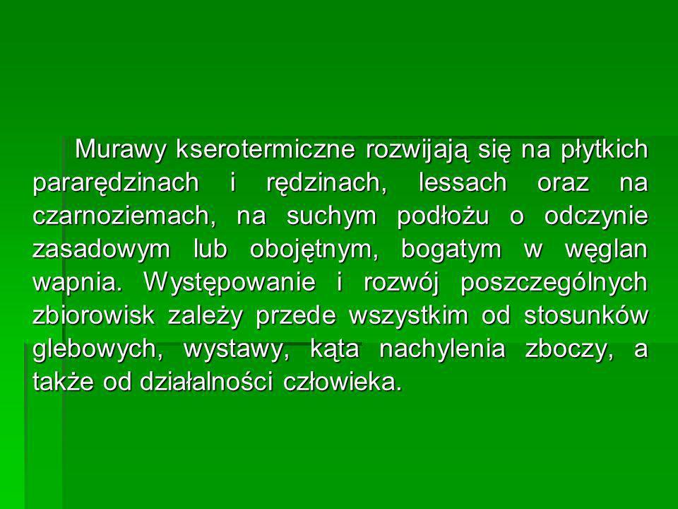 Bardzo bogate florystycznie murawy kserotermiczne związane są z wyraźnie wapieniolubnymi i światłolubnymi gatunkami, wśród których znajduje się wiele roślin prawnie chronionych i zagrożonych: Sierpik różnolistny Serratula lycopifolia – CR (krytycznie [skrajnie] zagrożony wyginięciem w skali kraju) Sierpik różnolistny Serratula lycopifolia – CR (krytycznie [skrajnie] zagrożony wyginięciem w skali kraju) żmijowiec czerwony Echium russicum– CR żmijowiec czerwony Echium russicum– CR Przetacznik zwodny Veronica paniculata– EN (silnie zagrożony wyginięciem w skali kraju) Przetacznik zwodny Veronica paniculata– EN (silnie zagrożony wyginięciem w skali kraju) Szczodrzeniec zmienny Chamaecytisus albus– EN Szczodrzeniec zmienny Chamaecytisus albus– EN Storczyk samiczy Orchis morio– EN Storczyk samiczy Orchis morio– EN Storczyk drobnokwiatowy Orchis ustulata– EN Storczyk drobnokwiatowy Orchis ustulata– EN Turzyca delikatna Carex supina– VU Turzyca delikatna Carex supina– VU Jaskier illiryjski Ranunculus illyricus– CR Jaskier illiryjski Ranunculus illyricus– CR Bylica pontyjska Artemisia pontica – CR Bylica pontyjska Artemisia pontica – CR Szafirek miękkolistny Muscari comosum– CR Szafirek miękkolistny Muscari comosum– CR Pszonacznik wschodni Conringia orientalis– EN Pszonacznik wschodni Conringia orientalis– EN