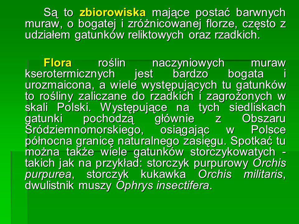 Przypuszczalnie rośliny ciepłolubne-budujące obecnie murawy kserotermiczne -przywędrowały na ziemie obecnej Polski z południa, wzdłuż dolin rzecznych, osiedlając się pierwotnie na naturalnych stromych, podcinanych przez wody rzek, urwistych i nagrzanych przez słońce brzegach.