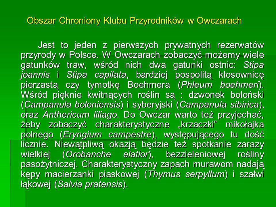 Jest to jeden z pierwszych prywatnych rezerwatów przyrody w Polsce. W Owczarach zobaczyć możemy wiele gatunków traw, wśród nich dwa gatunki ostnic: St